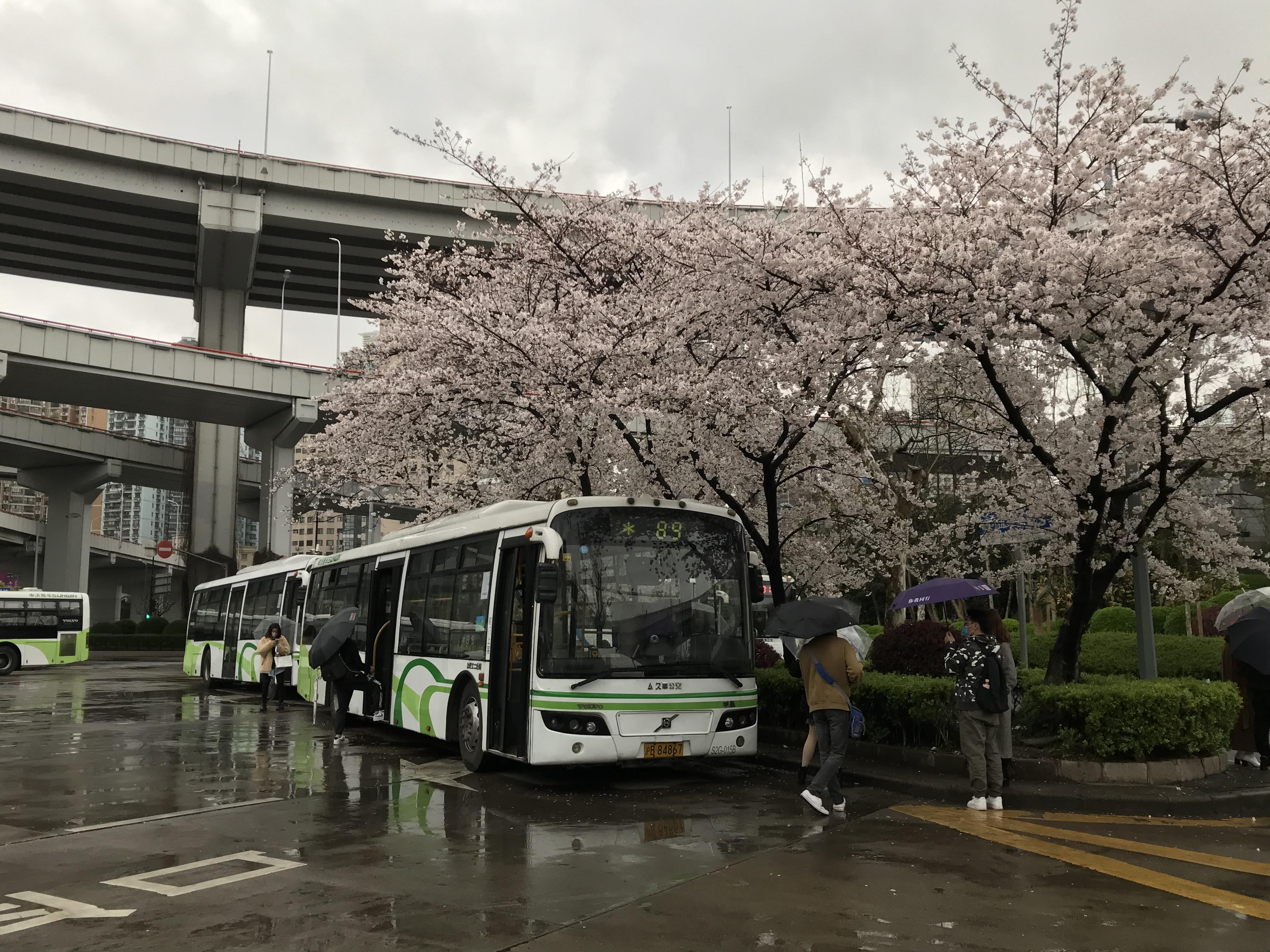 南浦大橋に綺麗な桜 | gentle